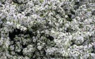 White Flowers In October  2 High Resolution Wallpaper