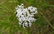 White Flowers In October  23 Desktop Background