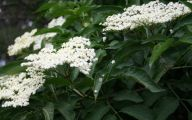 White Flowers In October  3 Free Wallpaper