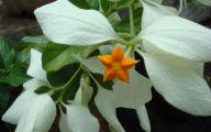 White Flowers In October  4 Desktop Wallpaper