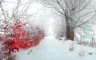 White Flowers In Winter  12 Free Wallpaper