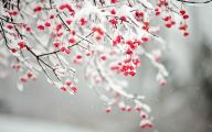 White Flowers In Winter  21 Wide Wallpaper