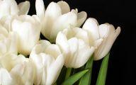 White Tulips 5 Desktop Background