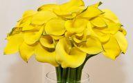 Yellow Calla Lilies 21 Desktop Background