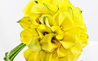 Yellow Calla Lilies 38 Cool Wallpaper