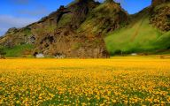 Yellow Flowers Field  20 Cool Hd Wallpaper
