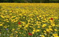 Yellow Flowers Field  21 Cool Hd Wallpaper