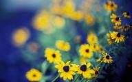 Yellow Flowers Field  25 Hd Wallpaper