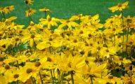 Yellow Flowers Field  30 High Resolution Wallpaper