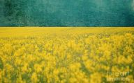 Yellow Flowers Field  7 High Resolution Wallpaper