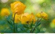 Yellow Flowers For Garden  11 Widescreen Wallpaper