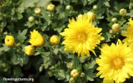 Yellow Flowers For Garden  14 Background Wallpaper