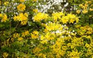 Yellow Flowers For Garden  2 Free Hd Wallpaper