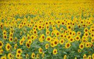 Yellow Flowers For Garden  20 High Resolution Wallpaper