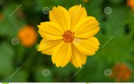 Yellow Flowers For Garden  22 Free Wallpaper