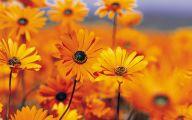 Yellow Flowers For Garden  24 Widescreen Wallpaper