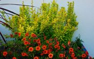 Yellow Flowers For Garden  3 Desktop Background