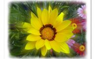 Yellow Flowers For Garden  35 Cool Hd Wallpaper