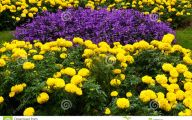 Yellow Flowers For Garden  36 Widescreen Wallpaper