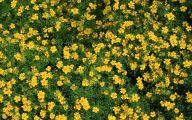 Yellow Flowers For Garden  6 Cool Wallpaper