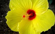 Yellow Flowers Hawaii  15 Cool Hd Wallpaper