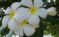 Yellow Flowers Hawaii  18 Free Hd Wallpaper