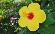 Yellow Flowers Hawaii  19 Free Hd Wallpaper