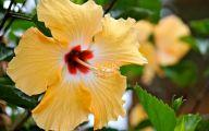 Yellow Flowers Hawaii  2 Free Hd Wallpaper