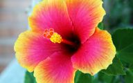 Yellow Flowers Hawaii  22 Background Wallpaper