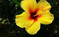 Yellow Flowers Hawaii  28 Free Wallpaper
