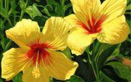 Yellow Flowers Hawaii  5 Hd Wallpaper