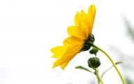 Yellow Flowers Hd  17 Hd Wallpaper