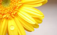 Yellow Flowers Hd  2 Background Wallpaper
