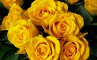 Yellow Flowers Hd  25 Hd Wallpaper