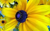 Yellow Flowers Images  4 Widescreen Wallpaper
