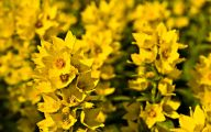 Yellow Flowers Images  5 Wide Wallpaper