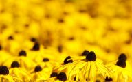 Yellow Flowers Images  7 Cool Hd Wallpaper