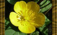 Yellow Flowers Images  9 Desktop Wallpaper
