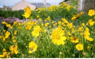 Yellow Flowers In A Dream  19 Desktop Wallpaper