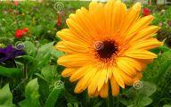 Yellow Flowers In A Dream  27 Hd Wallpaper