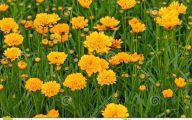 Yellow Flowers In A Dream  35 Free Hd Wallpaper