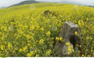 Yellow Flowers In A Dream  9 Desktop Wallpaper