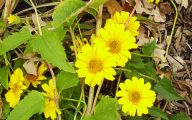 Yellow Flowers In Fall  12 Background