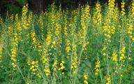Yellow Flowers In Fall  9 Free Hd Wallpaper