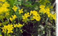 Yellow Flowers In Missouri  20 Hd Wallpaper