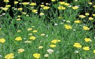 Yellow Flowers In Missouri  4 Free Hd Wallpaper