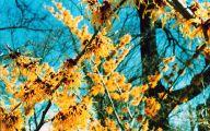 Yellow Flowers In Missouri  5 Desktop Wallpaper