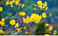 Yellow Flowers In Spring  1 Desktop Background
