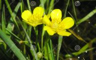 Yellow Flowers In Spring  12 High Resolution Wallpaper