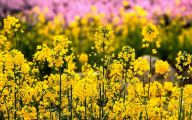 Yellow Flowers In Spring  14 Wide Wallpaper